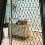 Security retractable door